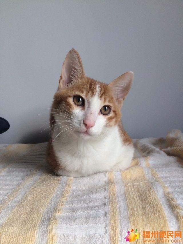 朋友 第二波/【一朋友家的猫】第二波照片,萌猫的生前生后!